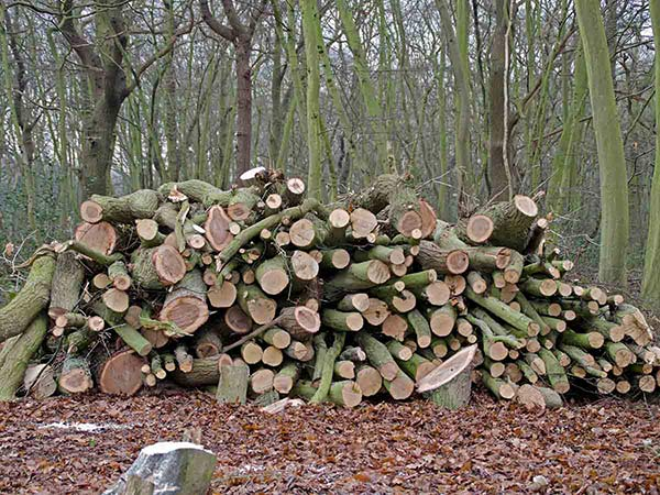 Cord of logs for sale