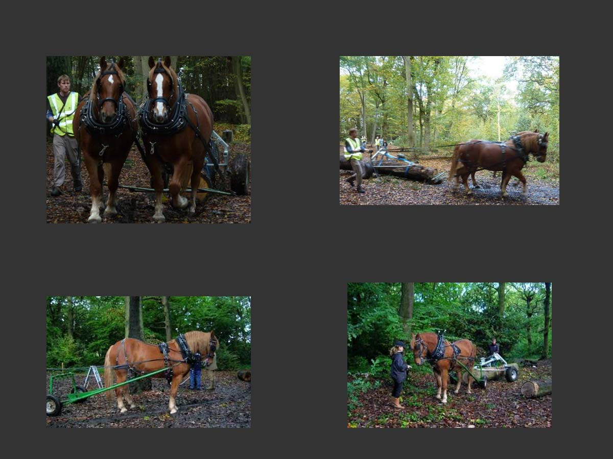 castle Point horses in woods