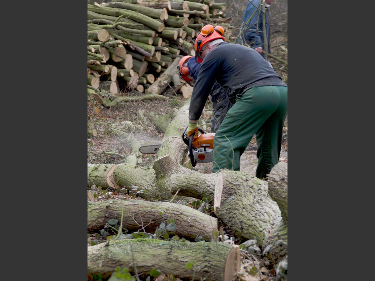 chainsaw work in woodland